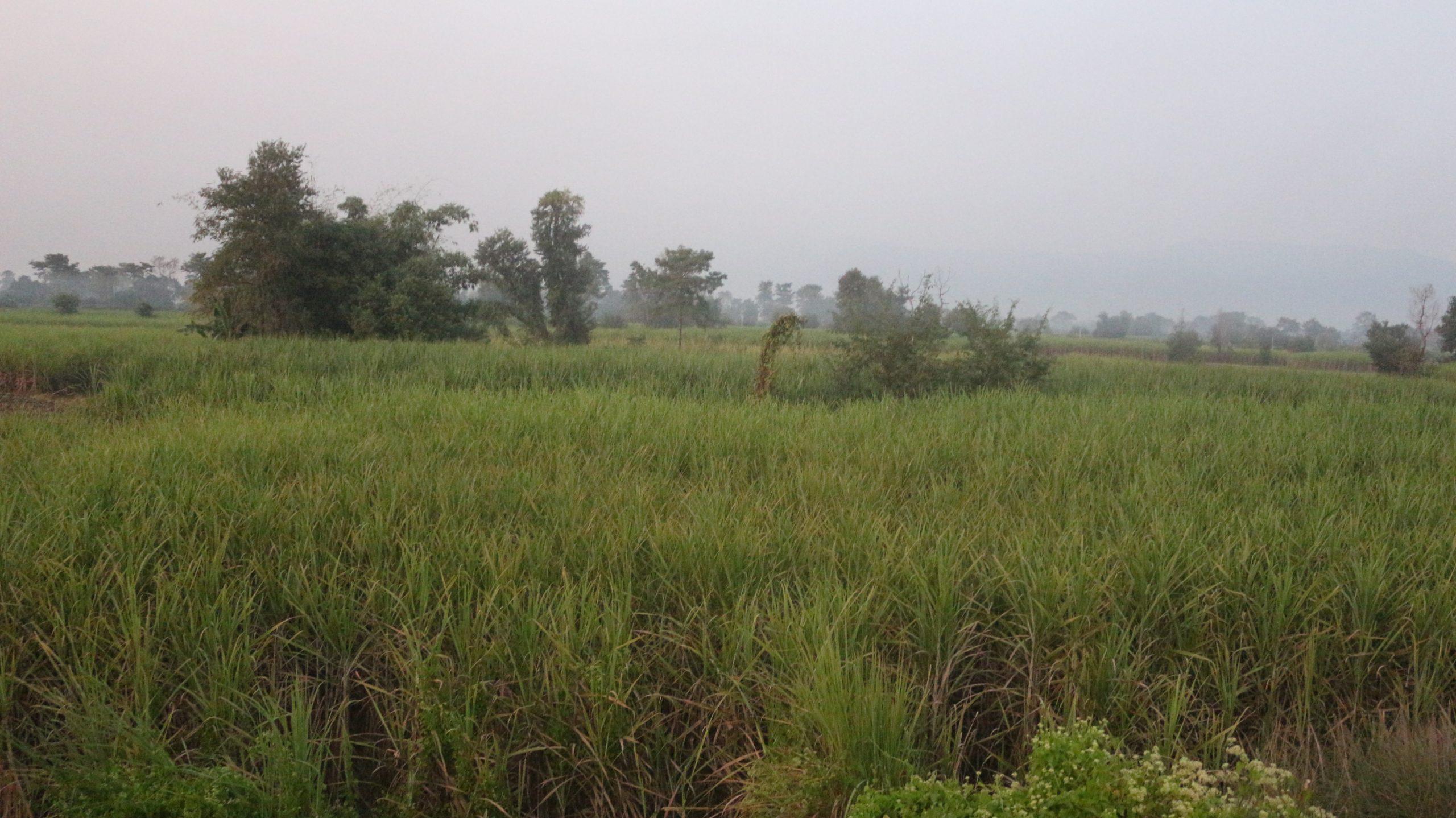 नवलपरासीका किसानले उखुको ५२ करोड भुक्तानी पाएनन